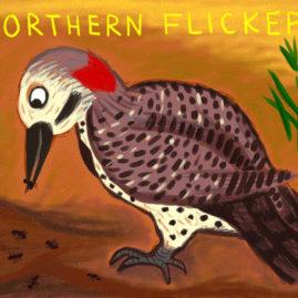 Northern Flicker